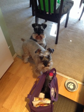 Auntie? Hey! What are you doing? You owe us treats!
